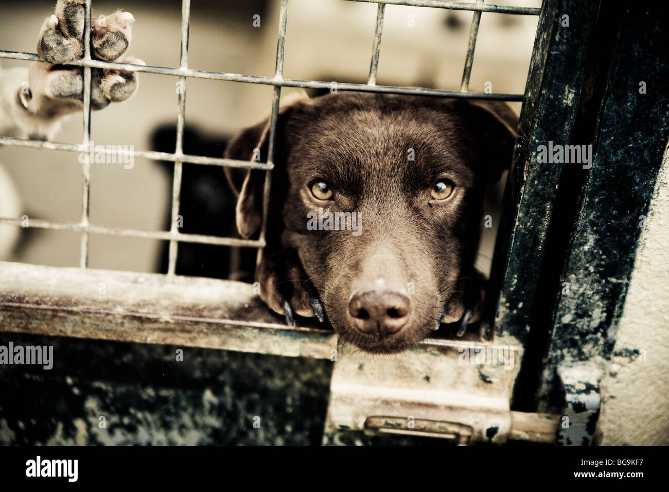 Dog looking out of a cage at a rescue center Stock Photo