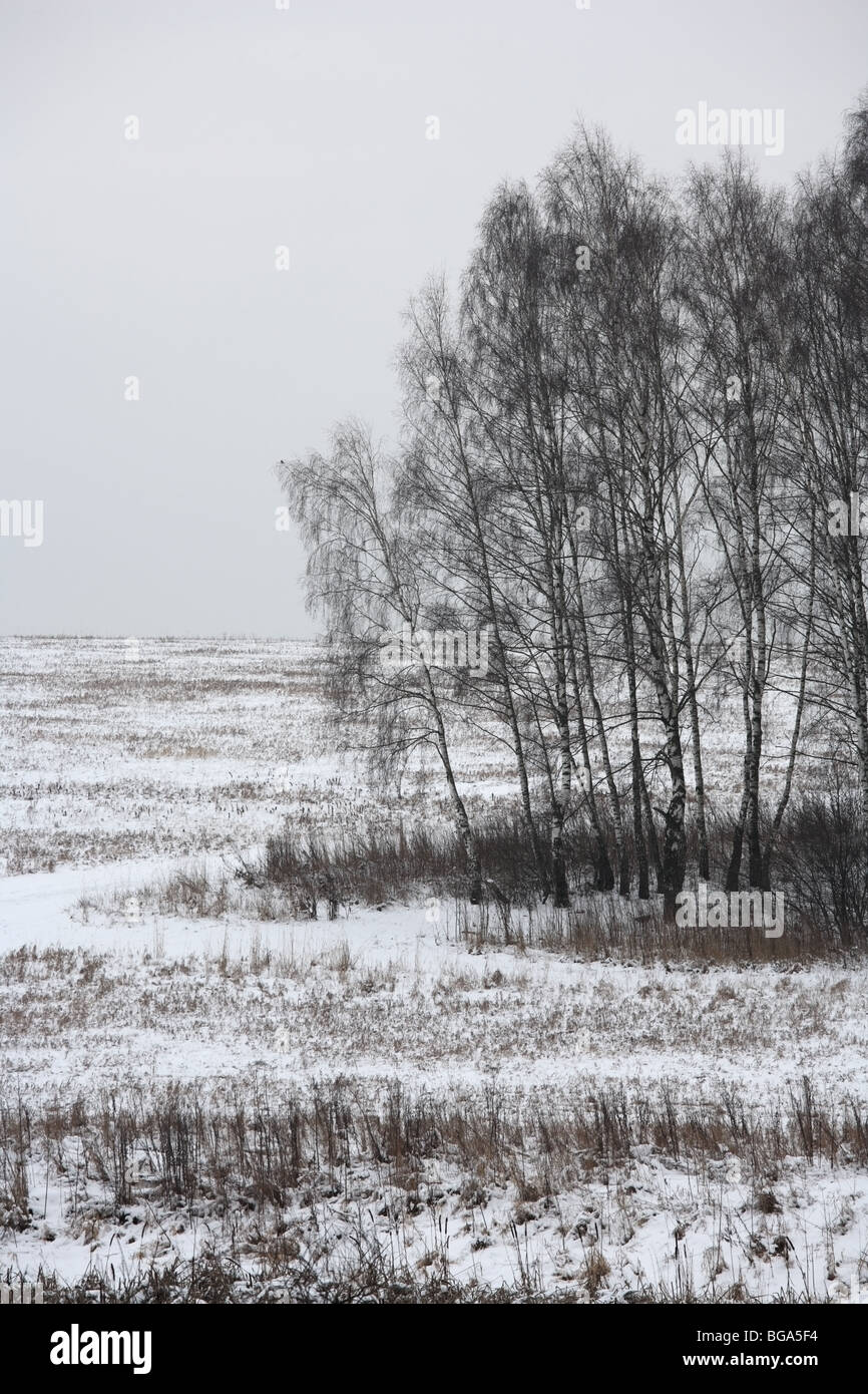 Winter landscape with birch trees on an overcast day, vertical composition. Moscow, Russia. - Stock Image