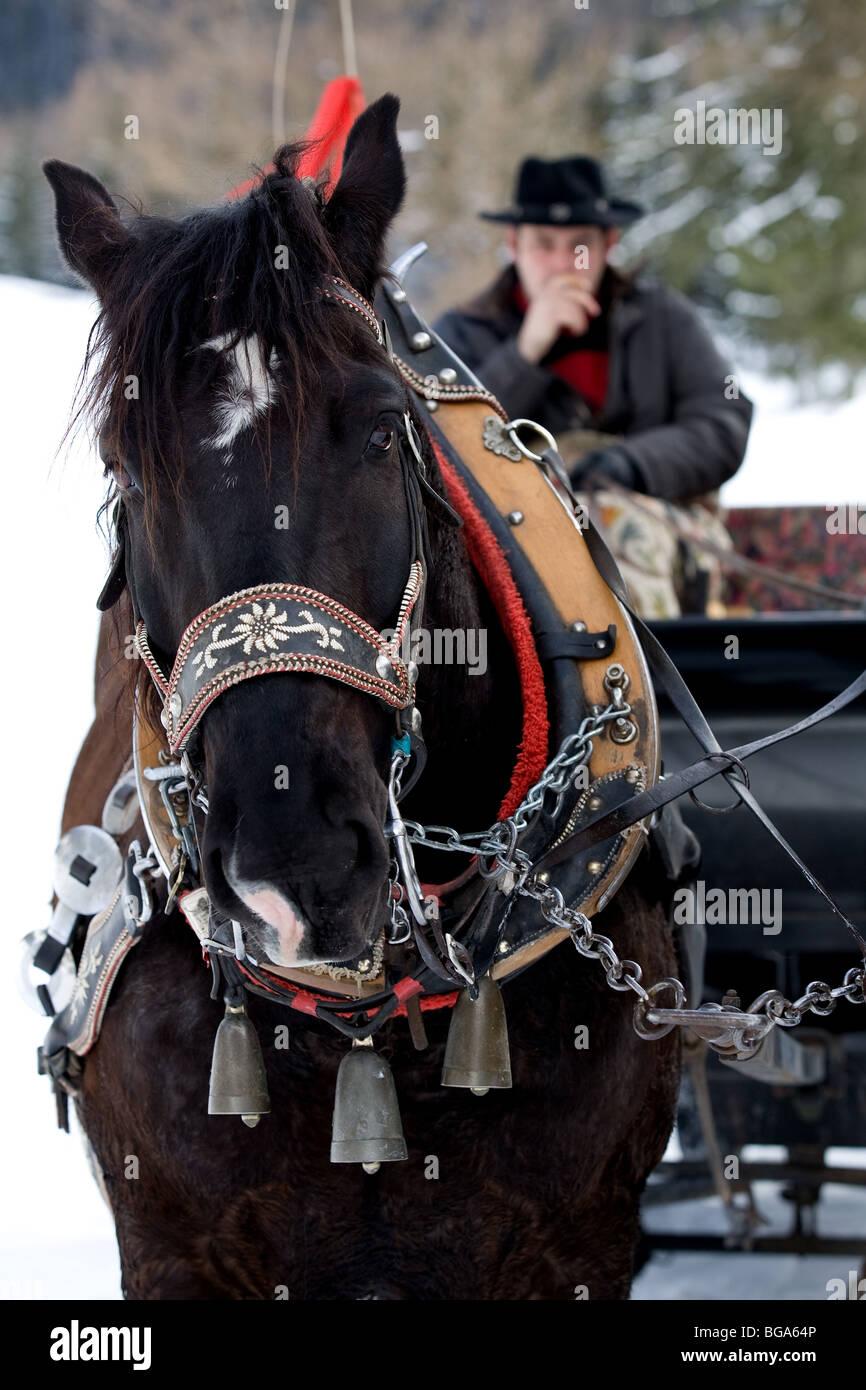 Europe, Italy, Alpi, Alto Adige, Dolomiti, snow, horse, sleigh, man - Stock Image