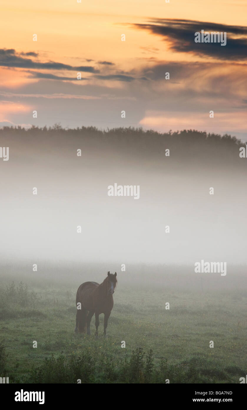 Horse standing in the mist, Northumberland, England - Stock Image