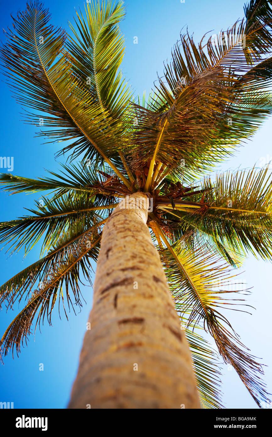 Palms and Caribbean sky - Stock Image