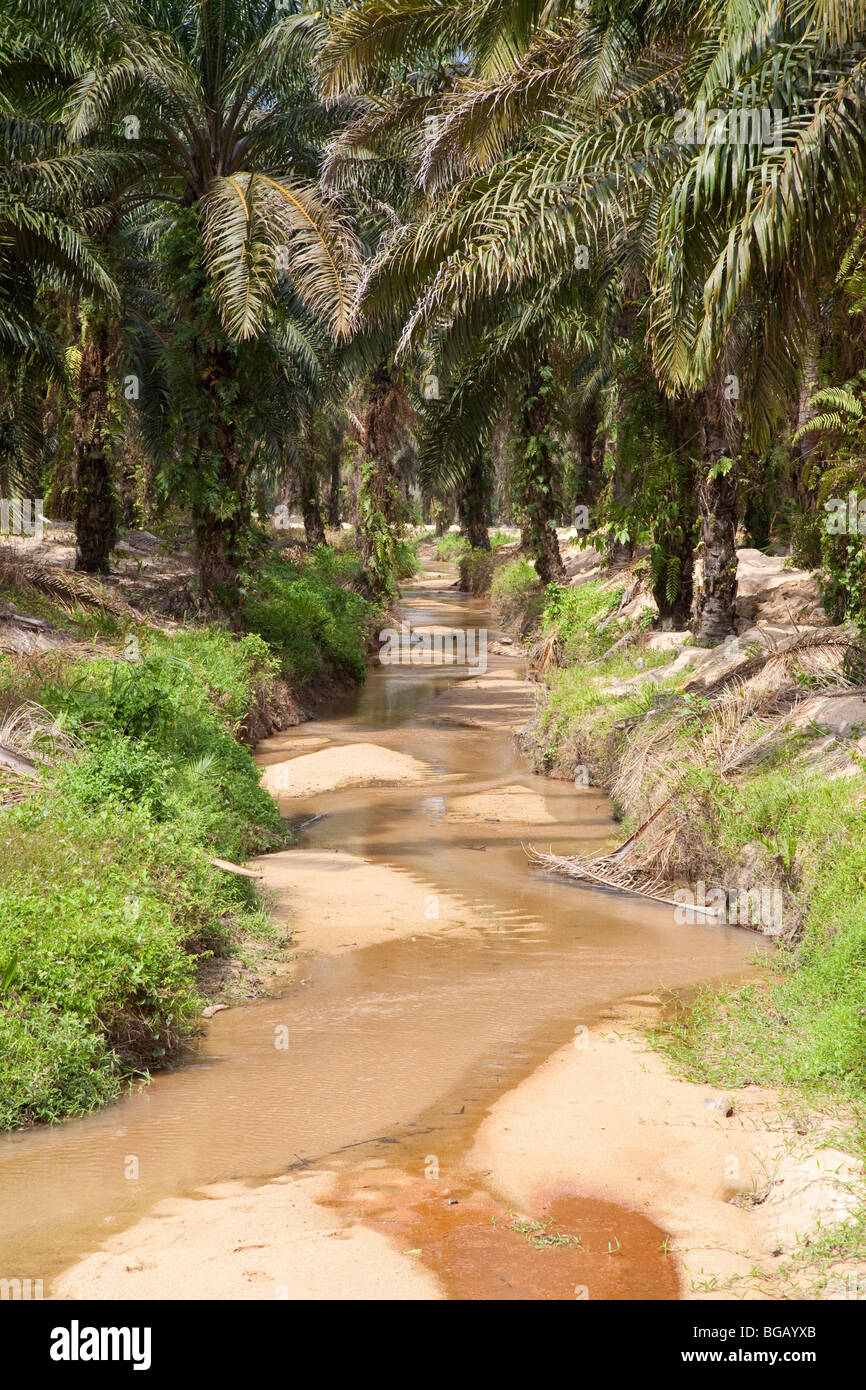 A creek flowing through the Sindora Palm Oil Plantation which is green certified by the Roundtable on Sustainable Stock Photo