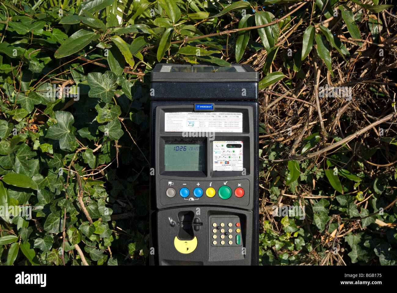 london borough of richmond upon thames parking meter standing against tall shrubbery - Stock Image