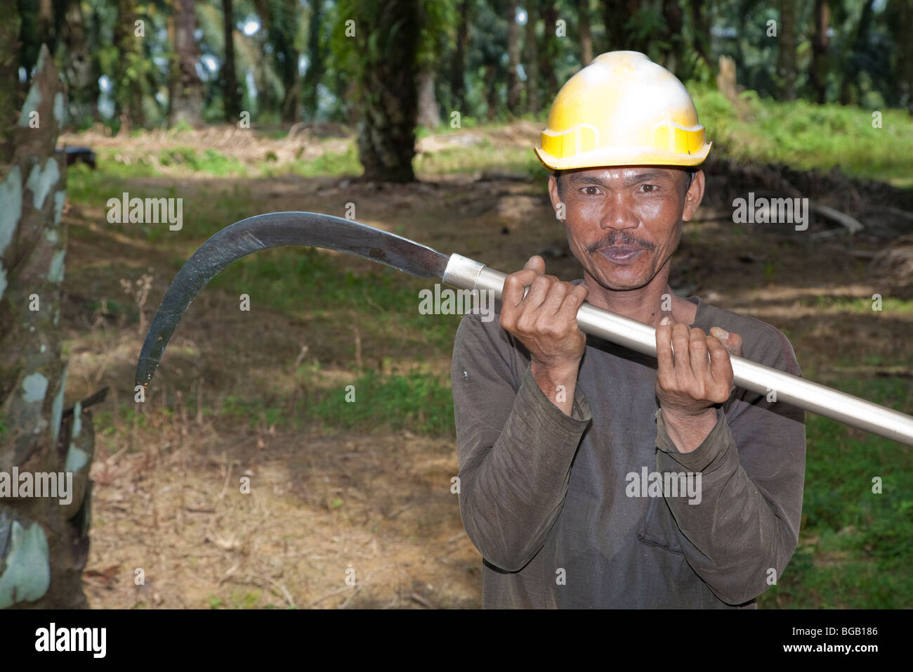 A worker with a long harvesting pole. The Sindora Palm Oil Plantation, Malaysia - Stock Image