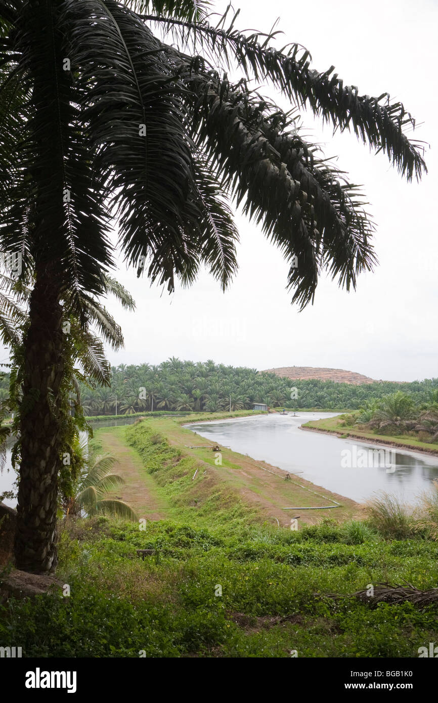 Anaerobic ponds hold palm oil mill effluent. The Sindora Palm Oil Mill, Malaysia Stock Photo