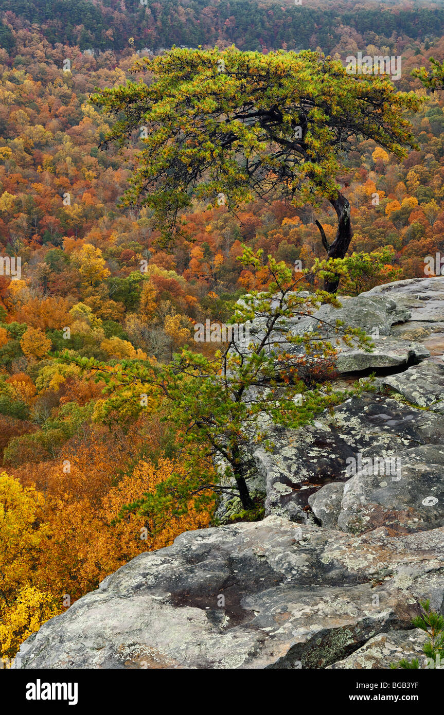 View of Autumn Color from Buzzards Roost in Fall Creek Falls State Park in Tennessee - Stock Image
