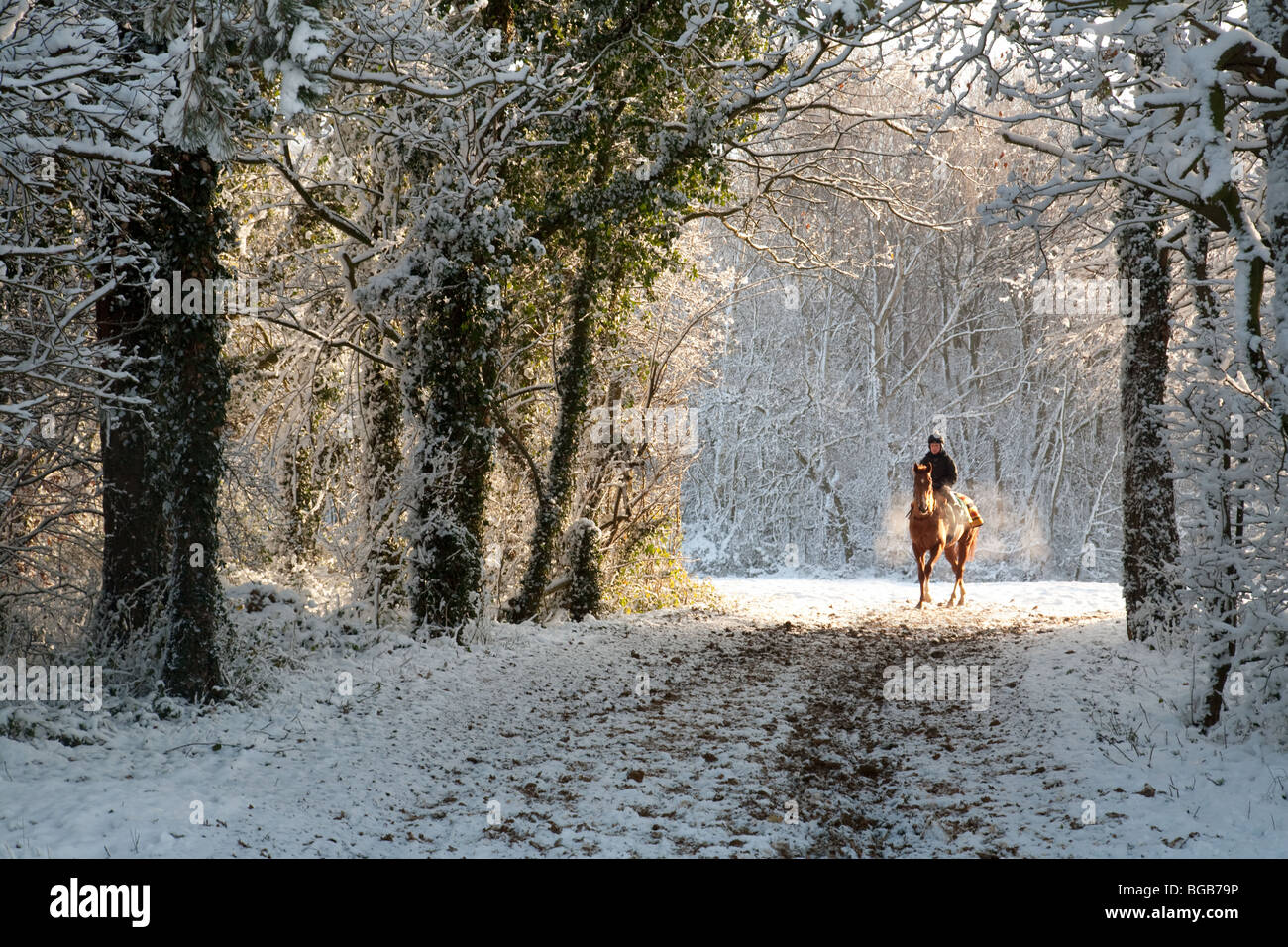 Racehorse and rider emerging from the woods, in winter snow, Newmarket, Suffolk, UK - Stock Image