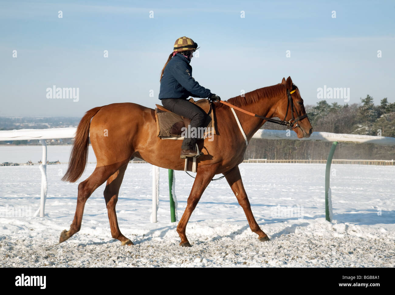 Racehorse and rider in winter snow, Warren Hill training ground, Newmarket, Suffolk, UK - Stock Image
