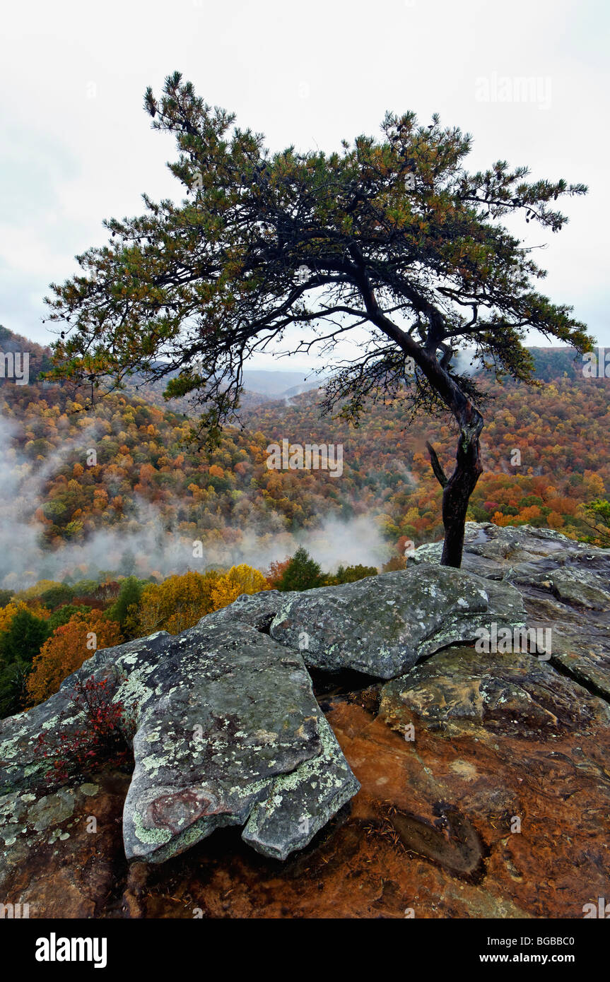 View from Buzzards Roost of Mist Rising and Autumn Color in Fall Creek Falls State Park in Tennessee - Stock Image