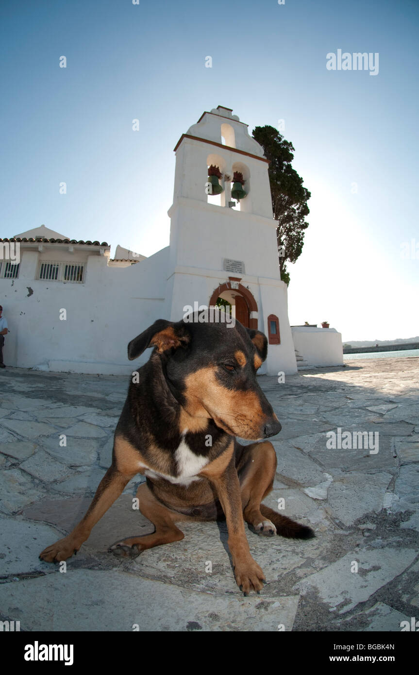 Dog In front Of Vlacherna Monastry of Panayia, Cofru, Greece - Stock Image