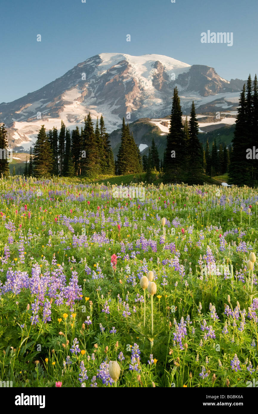 Summer Wildflowers, Mt. Rainier National Park, Washington - Stock Image
