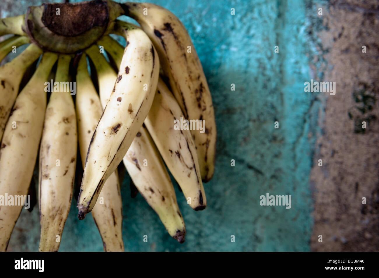 Bruised bananas - Stock Image