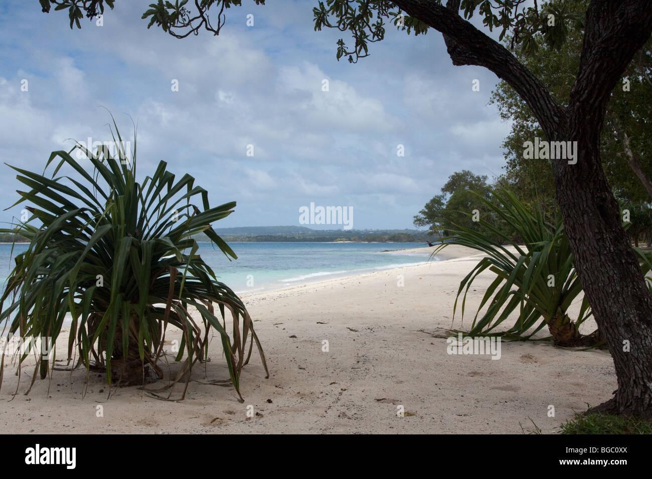 Vanuatu Beachfront - Stock Image