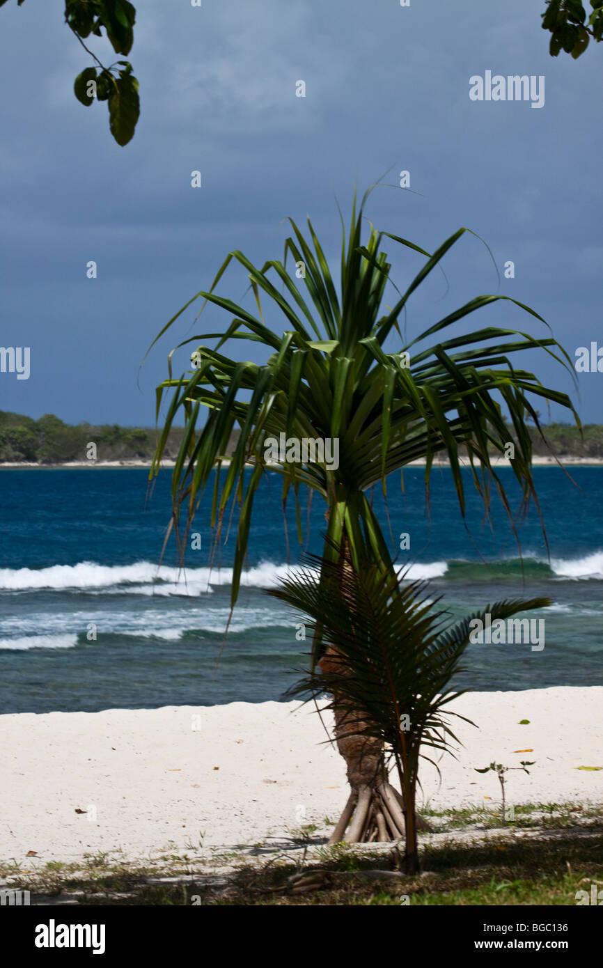 Vanuatu Beach - Stock Image