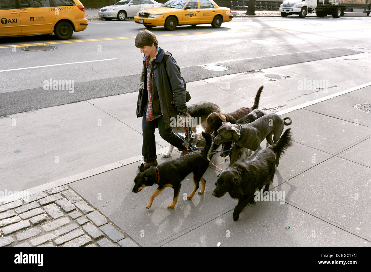 Female walking dogs near Central Park Manhattan New York USA - photo by Simon Dack Stock Photo