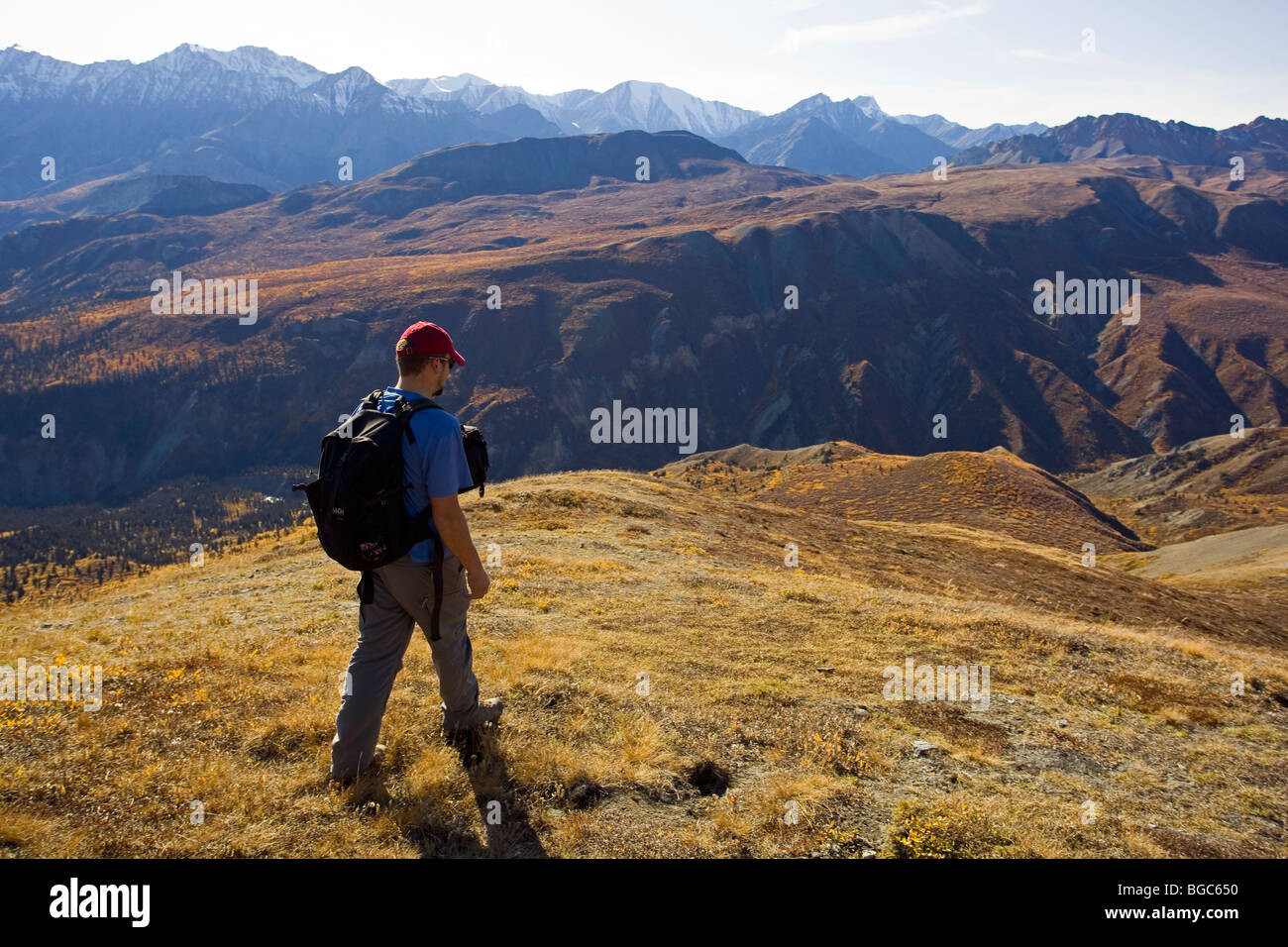 Hiker, man hiking, view from Sheep Mountain to Bullion Plateau, St. Elias Mountains, Kluane National Park and Reserve, - Stock Image