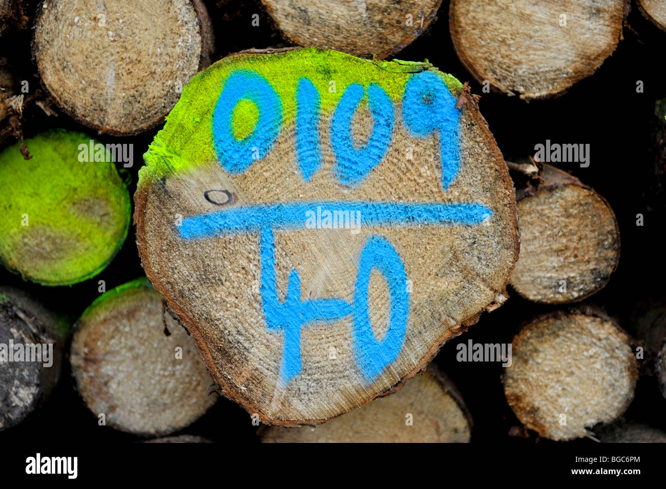 Felled tree trunks, marked Stock Photo