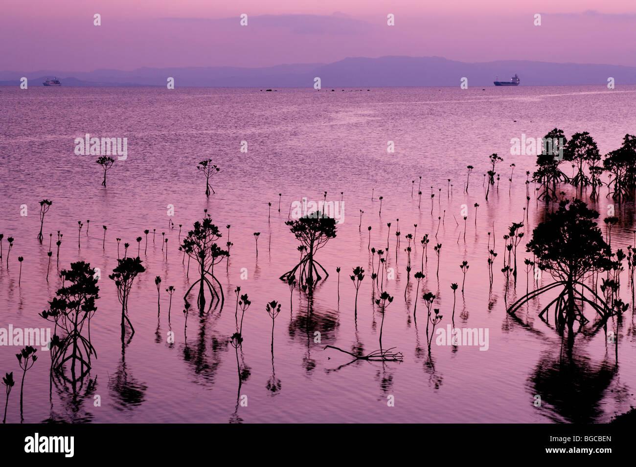 Mangrove, Ishigaki, Okinawa, Japan - Stock Image