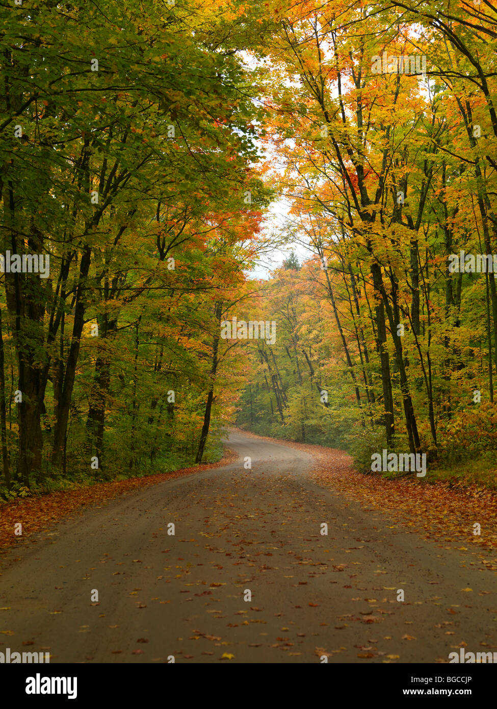Winding unpaved road through beautiful misty fall nature scenery. Algonquin Provincial Park, Ontario, Canada. - Stock Image
