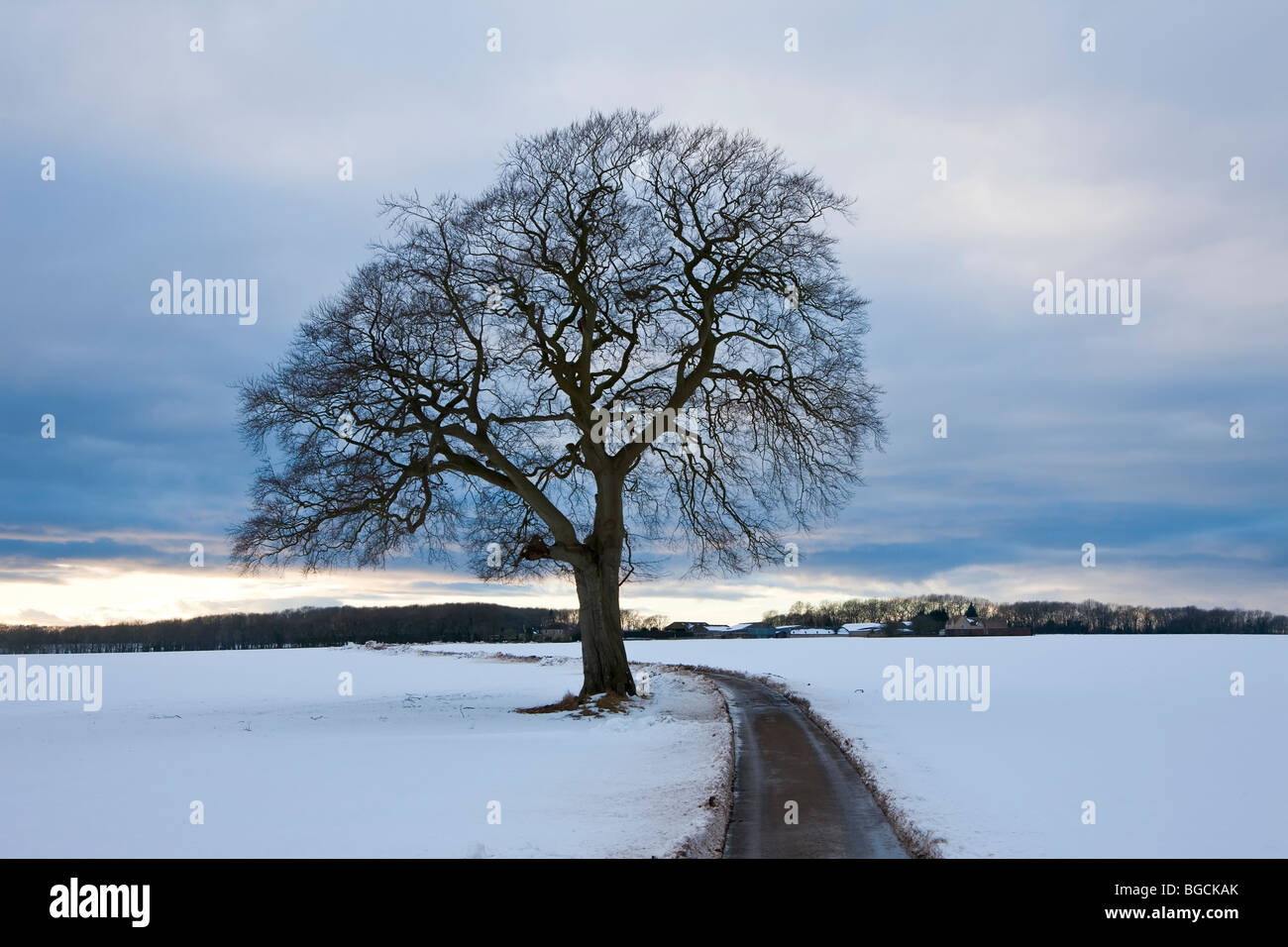 Winter tree & country lane, Gloucestershire, UK - Stock Image