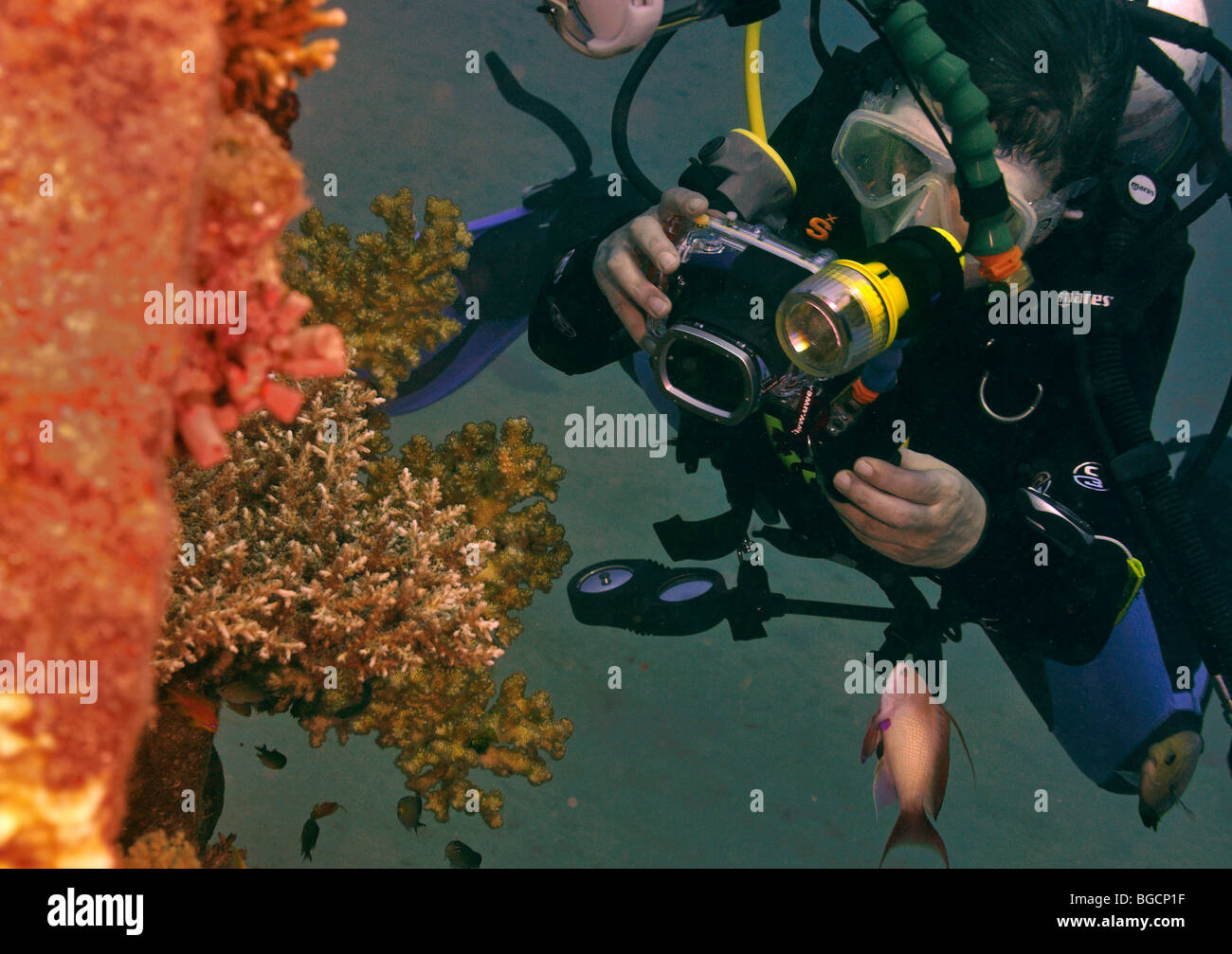 """Woman scuba diver with compact camera photographing coral, """"Red Sea"""", Egypt Stock Photo"""