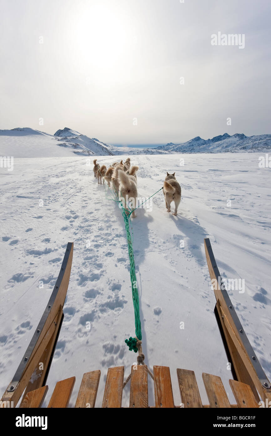 Dog sledding, E. Greenland - Stock Image