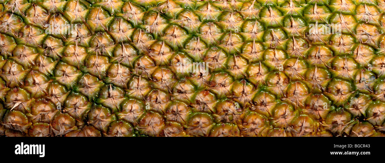 Pineapple skin - Stock Image