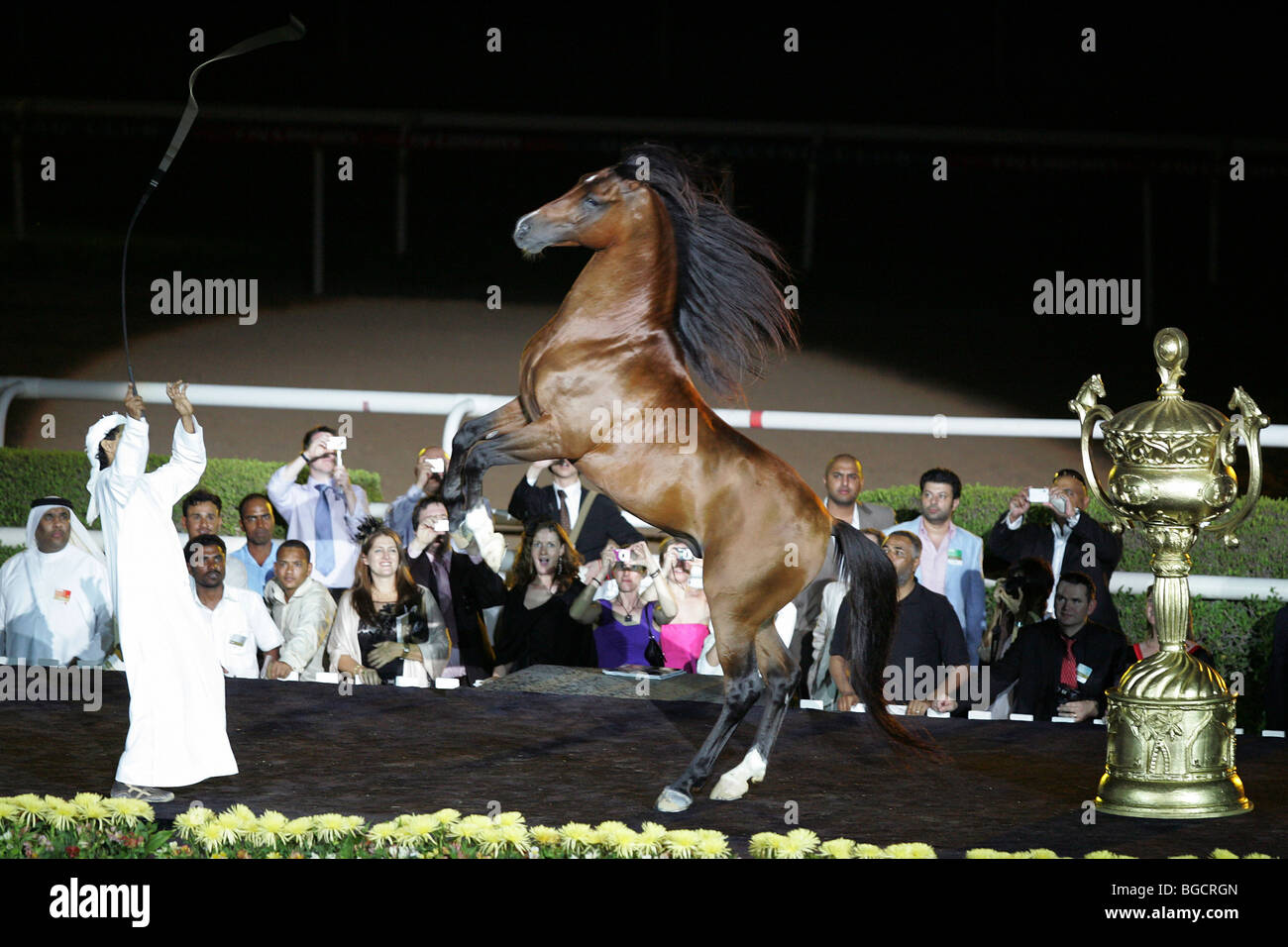A horse rearing on command, Dubai, United Arab Emirates - Stock Image