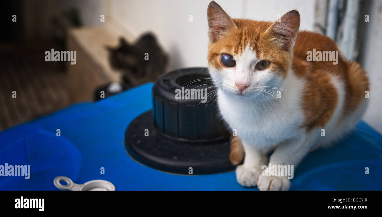 Disabled cat on trash can Princess islands, Istanbul, Turkey - Stock Image