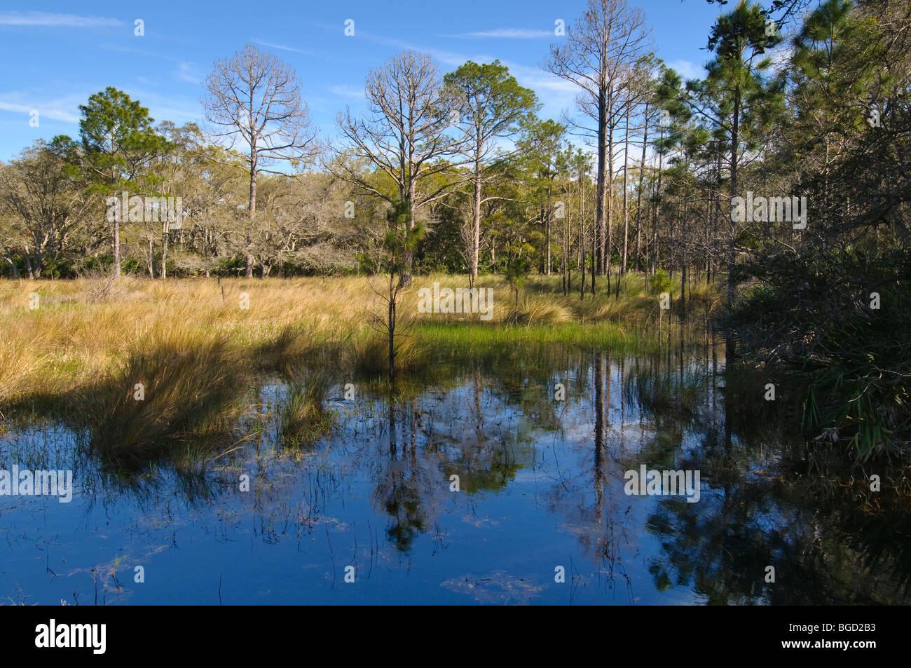 Guana Tolomato Matanzas National Estuarine Research Reserve St. Johns County Florida, USA. - Stock Image