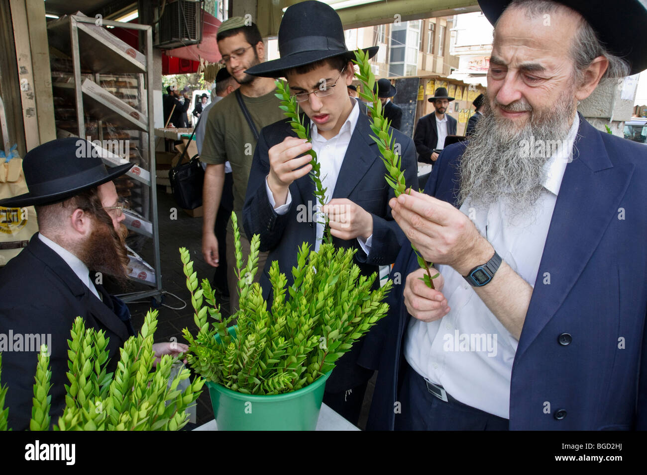 Bnei Brak, Israel. Orthodox Jews check a Hadas (myrtle) and a Lulav (palm branch) used in Jewish rituals at the - Stock Image