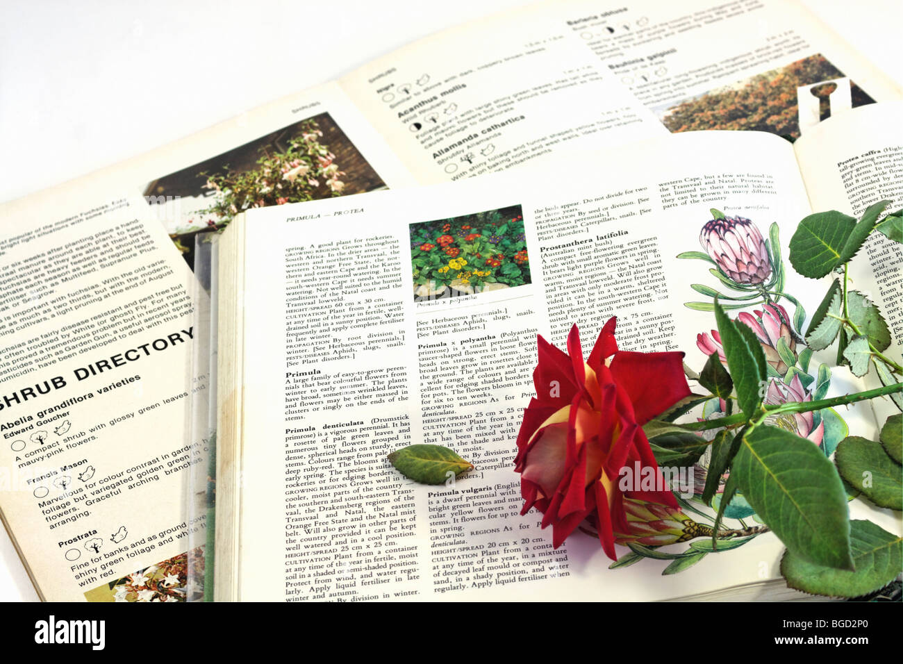 Gardening book and encyclopedia with red rose. Color Stock Photo ...