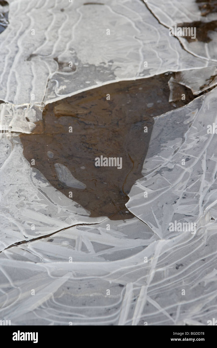 hole in thin ice cap on frozen puddle on a cold frosty winter morning in ireland - Stock Image