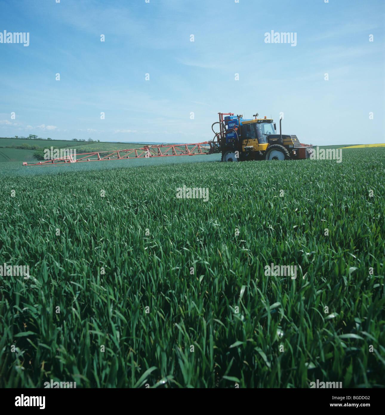 Fastrac tractor with mounted sprayer spraying establishged winter wheat crop, Devon - Stock Image