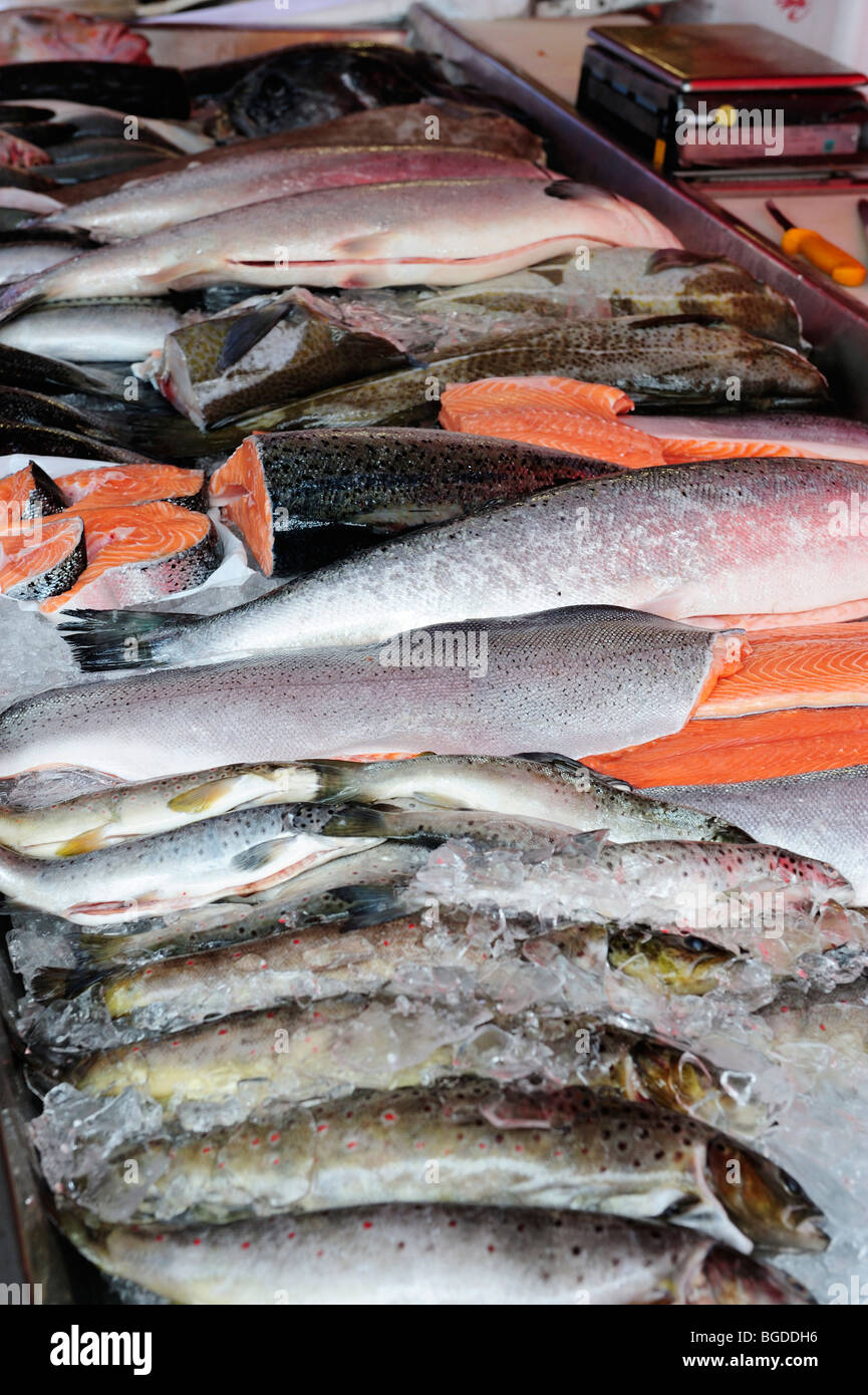 Fresh fish at the fish market in Bergen, Norway, Scandinavia, Northern Europe - Stock Image