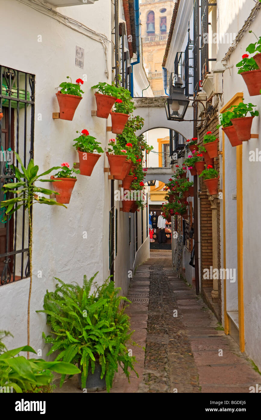Calleja de las Flores and the bell tower of the Mezquita (Cathedral Mosque) in the City of Cordoba, UNESCO World Heritage Site,  Stock Photo