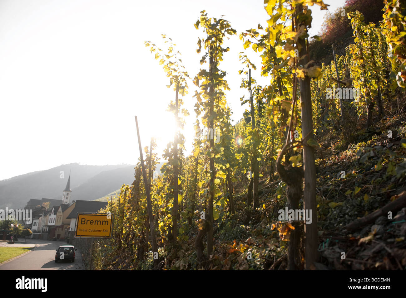 Wine growing town of Bremm, Bremmer Calmont with the steepest vineyards in the world, Mosel River, Rhineland-Palatinate, - Stock Image