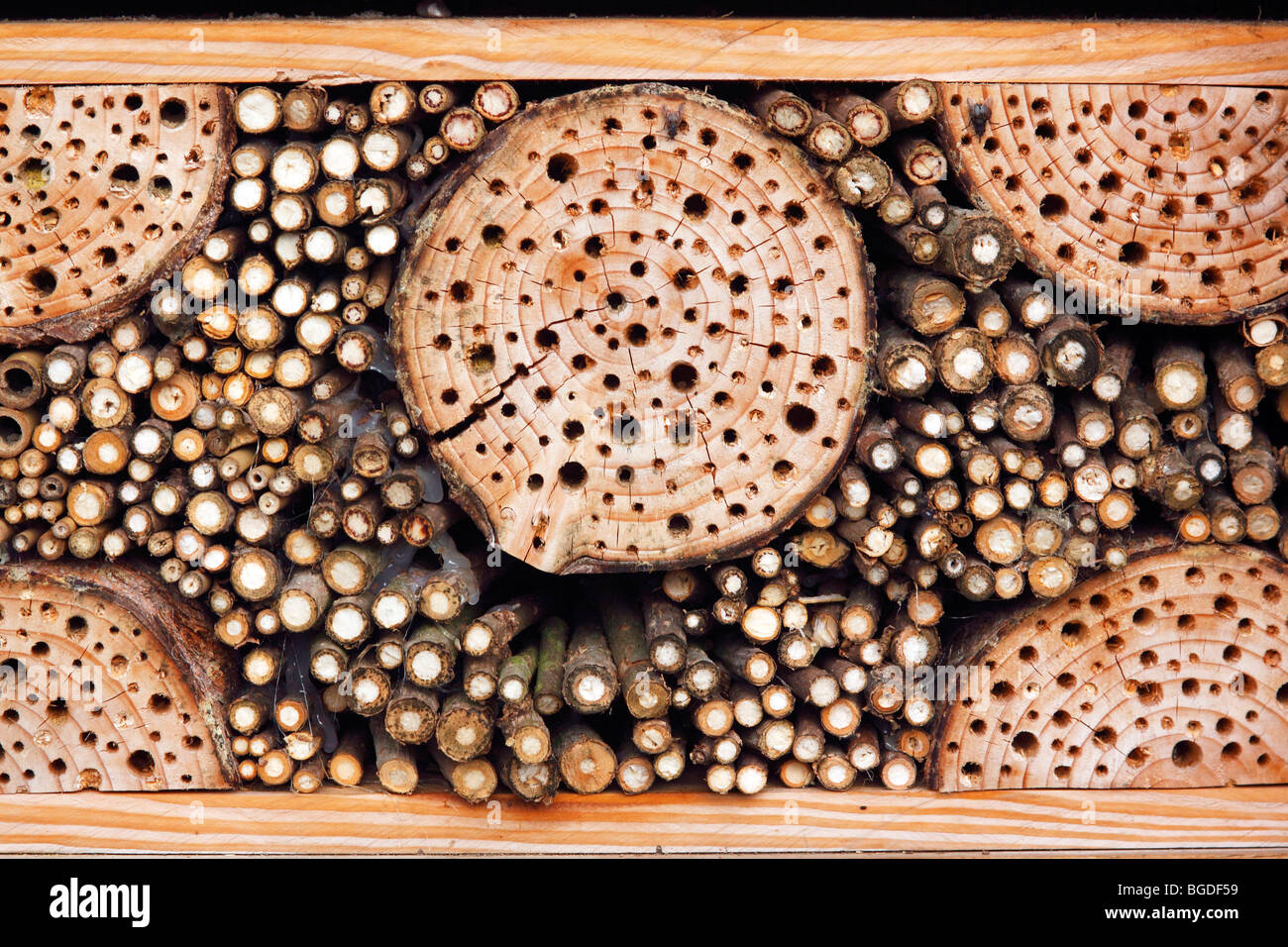 Artificial nest box for wild bees and other insects with wood and elderberry stems, wild bees-nest boxes, insect - Stock Image
