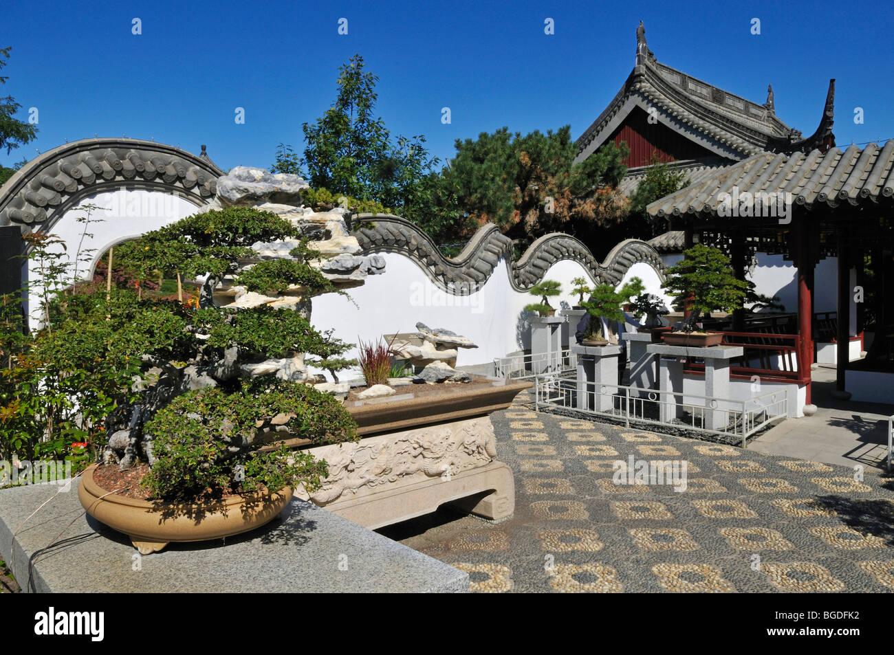Bonsai Tree Chinese Garden Jardin Botanique De Montreal Botanical