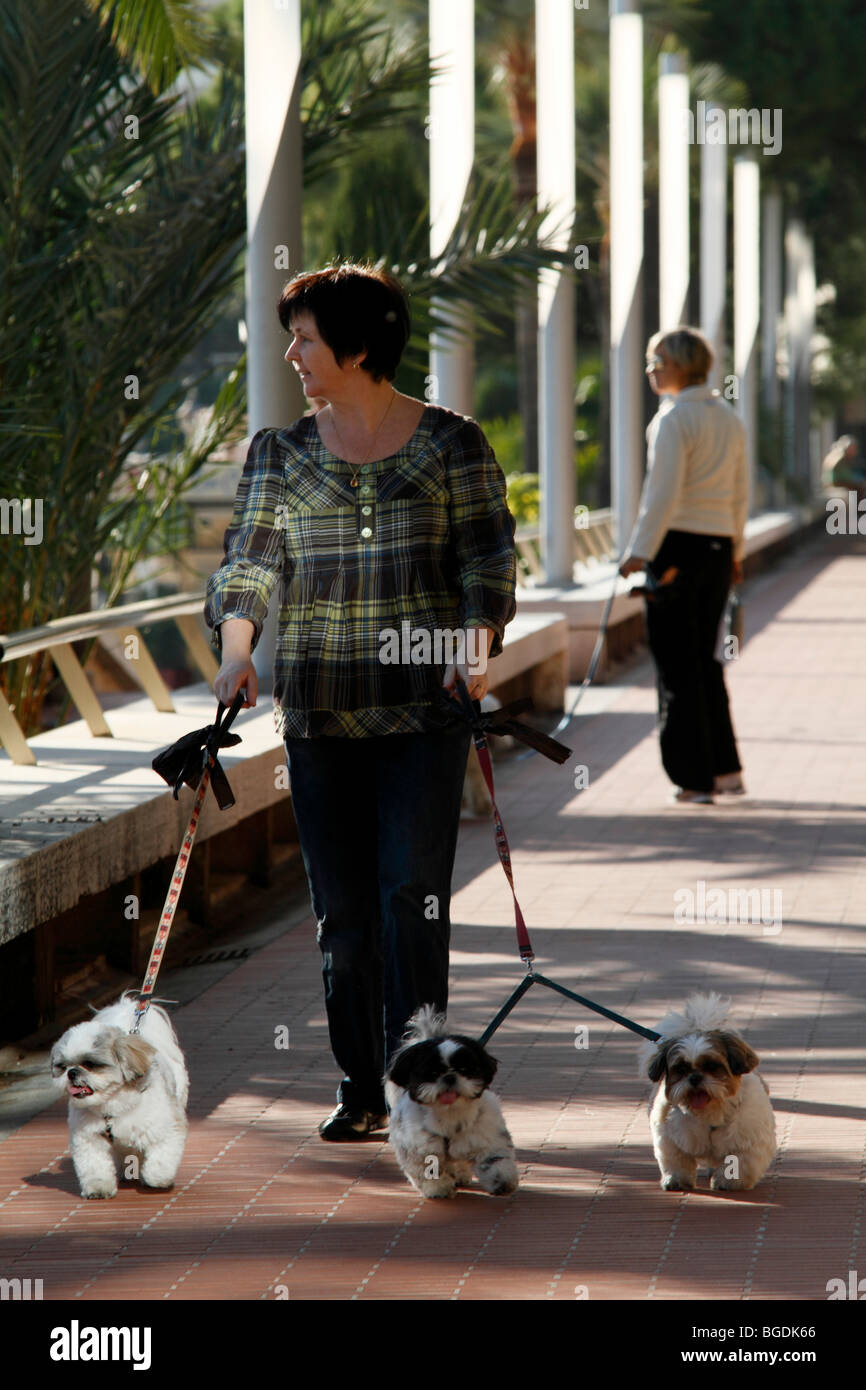 Woman walking three small dogs on the beach promenade of Larvotto, Principality of Monaco, Cote d'Azur, Europe - Stock Image