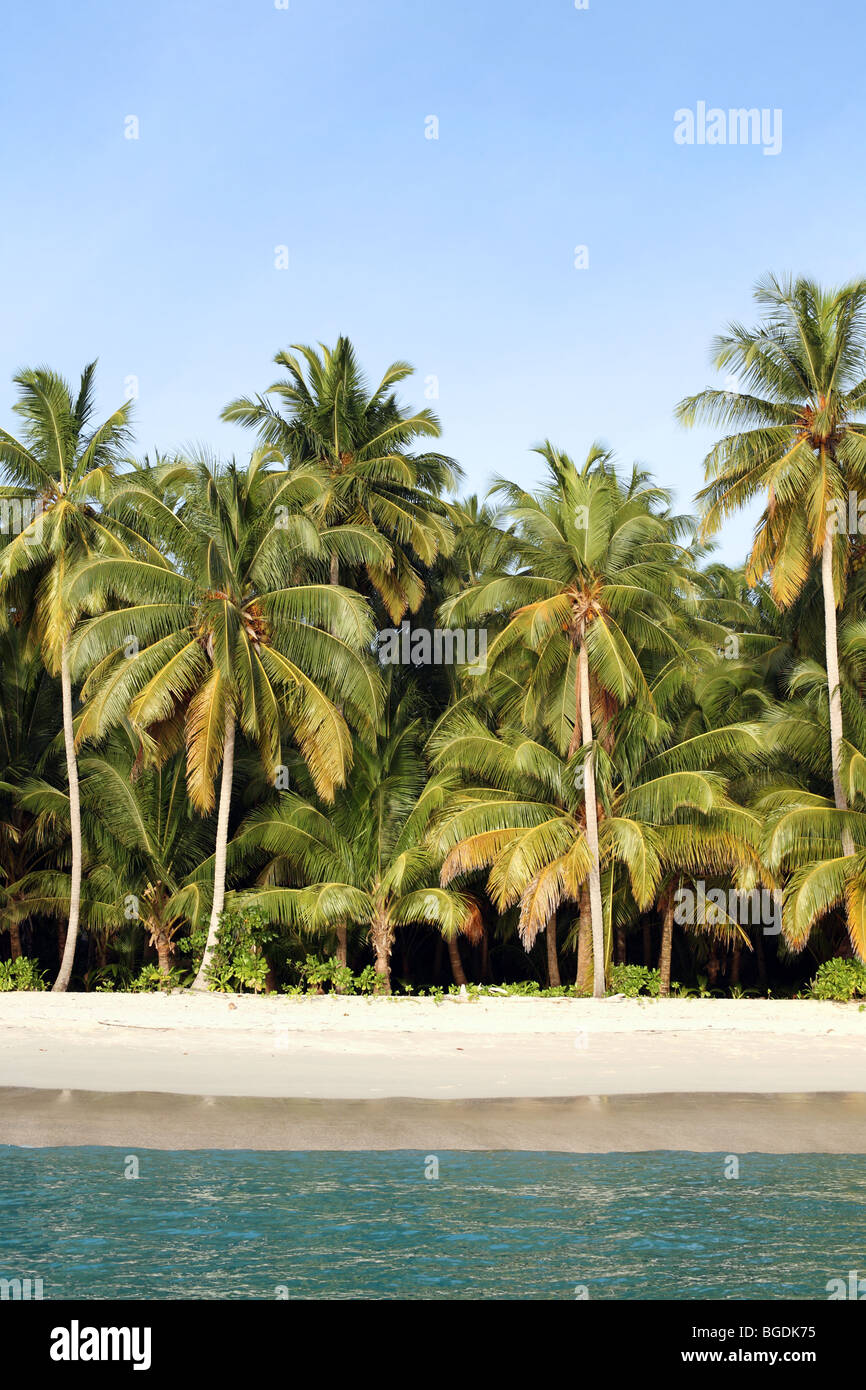 Coconut palms on the beach in the Mentawai Islands, Sumatra, Indonesia - Stock Image