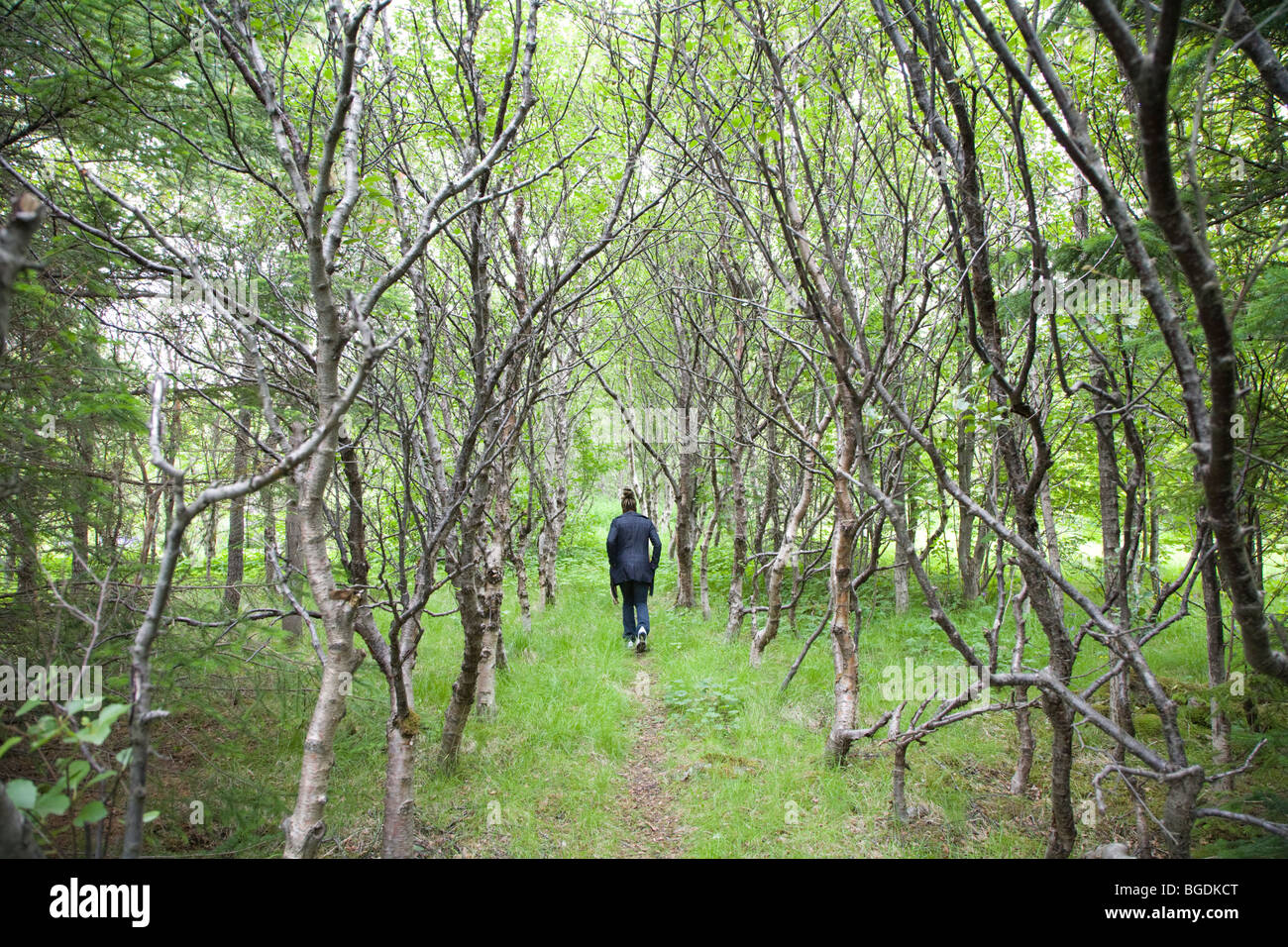 Woman walking in forest. Iceland. - Stock Image