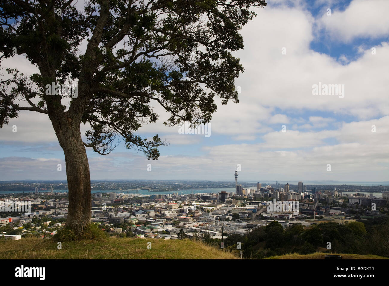View of Auckland sky tower from Mt. Eden, New Zealand, North Island - Stock Image