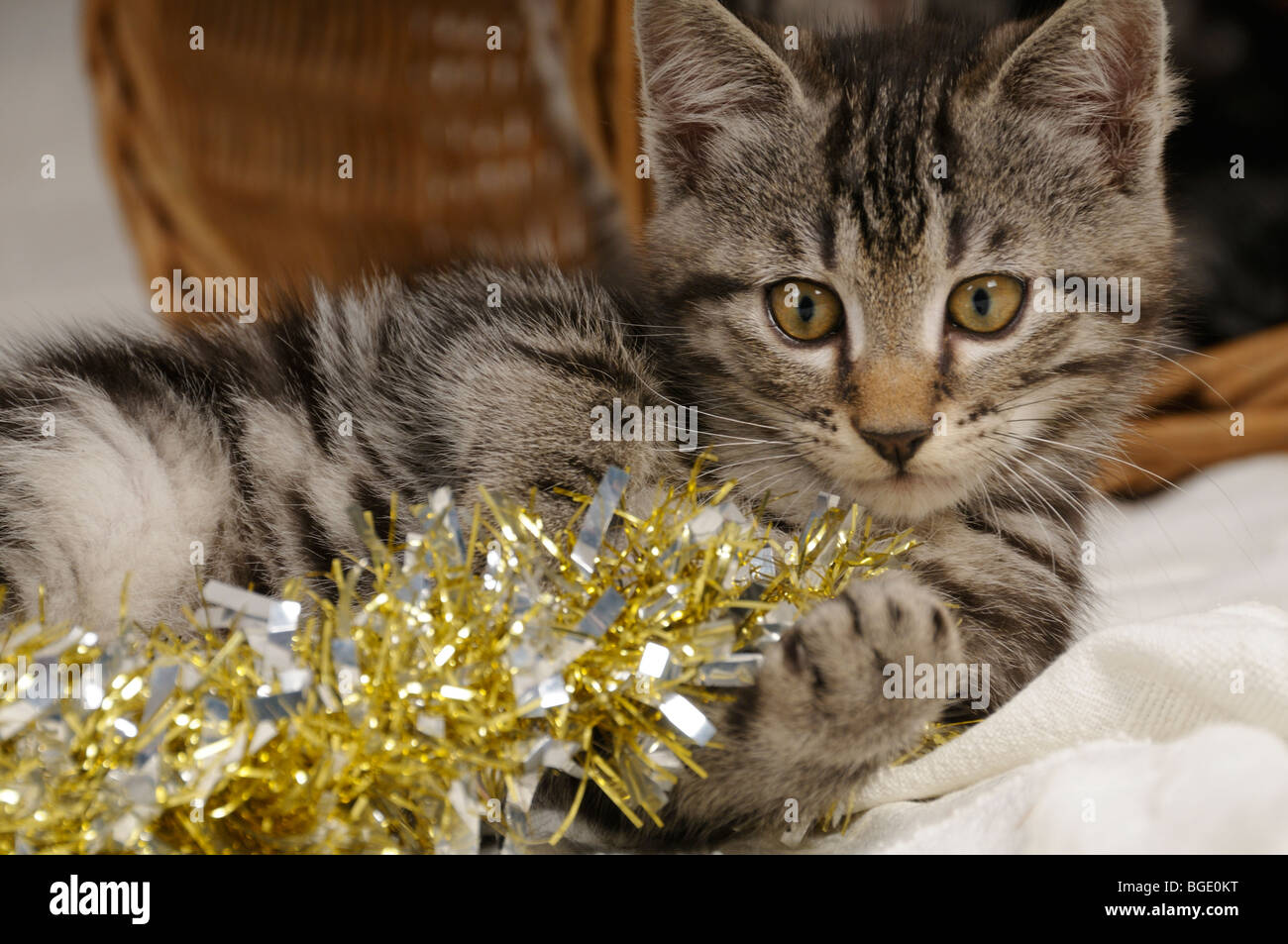 Stock photo of a kitten playing with some tinsel. - Stock Image
