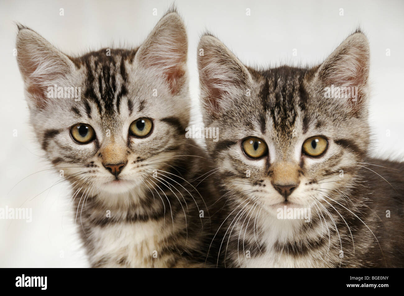 Stock photo of two kittens staring straight ahead at the camera. - Stock Image
