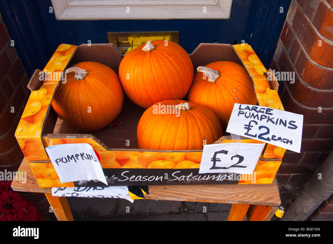 Pumpkins for sale in the Uk - Stock Image