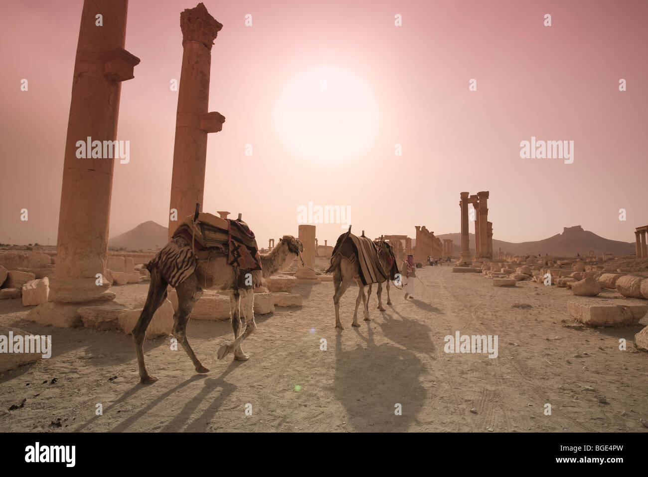 Syria, Palmyra ruins (UNESCO Site), Great Colonnade - Stock Image