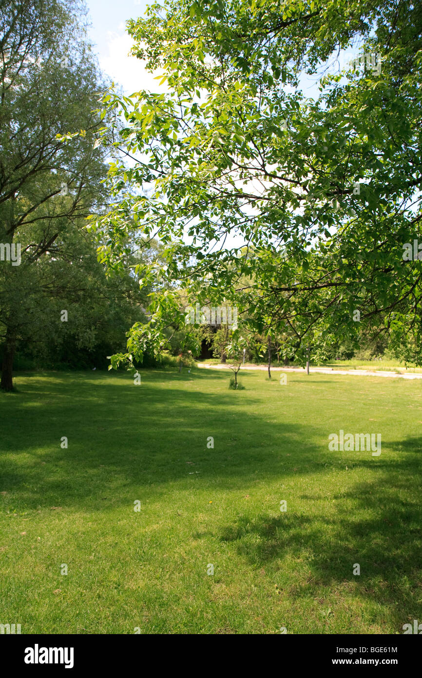 park grass sunny day - Stock Image