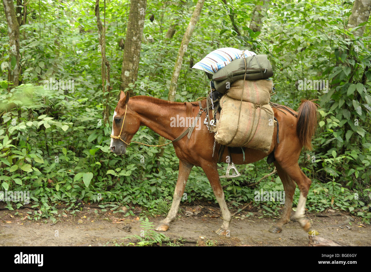 Horse Carrying Heavy Load In Tayrona National Park Colombia South Stock Photo 27357371 Alamy