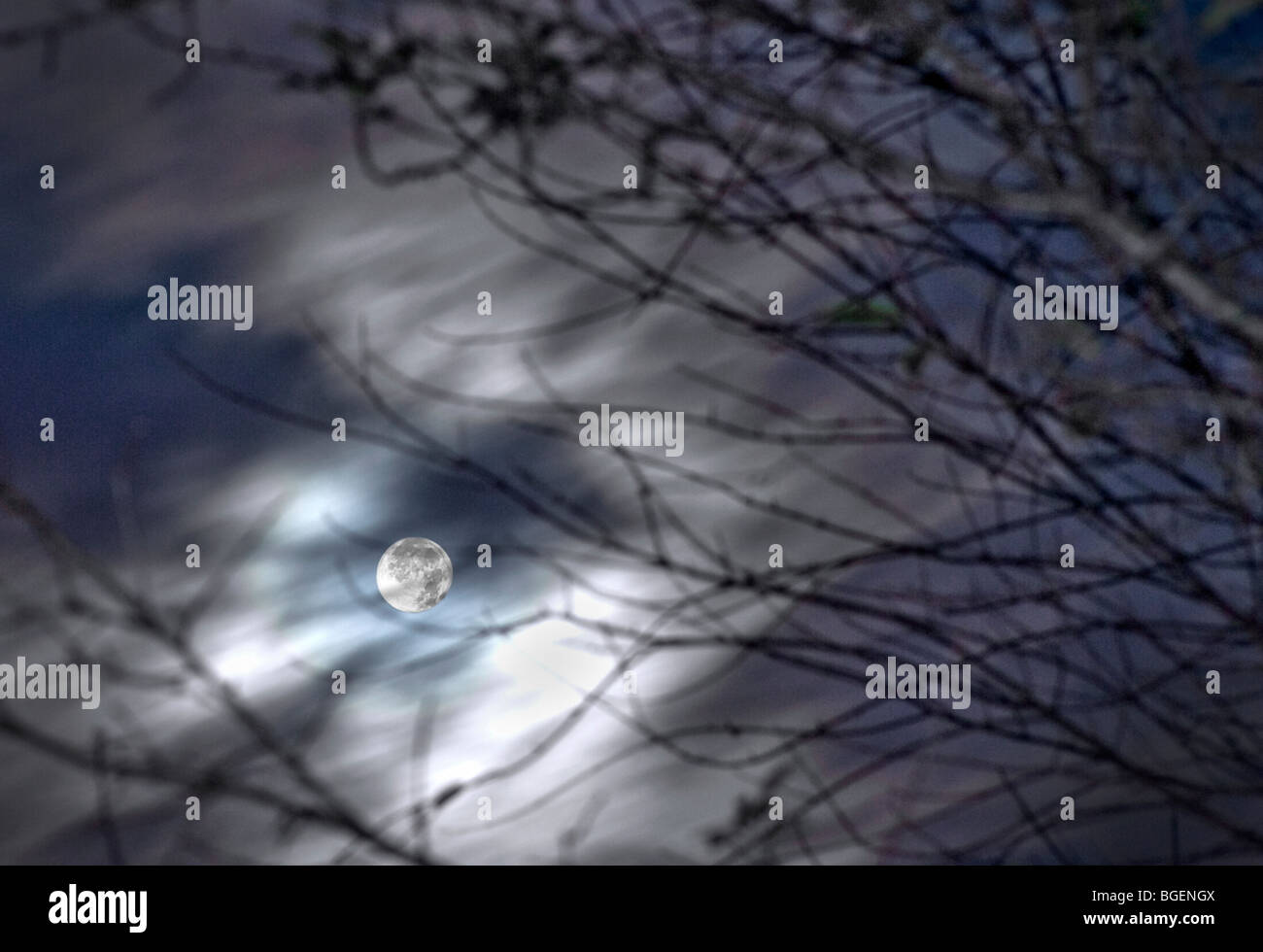 Full Moon With Moving Blurry Clouds And Tree Branches, Pennsylvania, USA Stock Photo